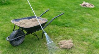 grass clean up